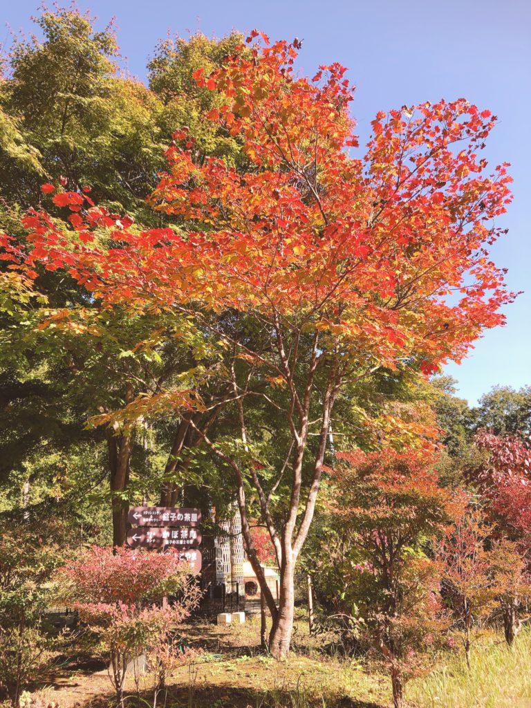 森のレストラン 紅葉 紅葉スポット