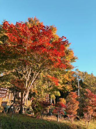 IMG_3872 森のレストラン 紅葉 もみじ