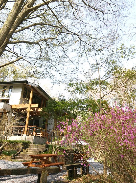 森のレストラン 自然